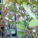 Emily through plants