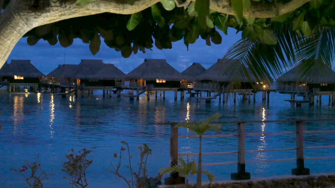 Night blue sky of water bungalows through the trees in Moorea