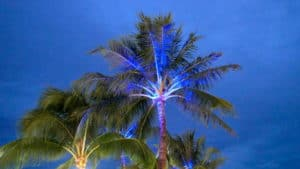 Blue light shining underneath a palm tree at night