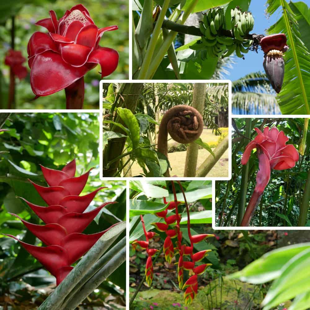Red Flowers of Tahiti
