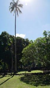 Single Palm withTiki in Tahiti