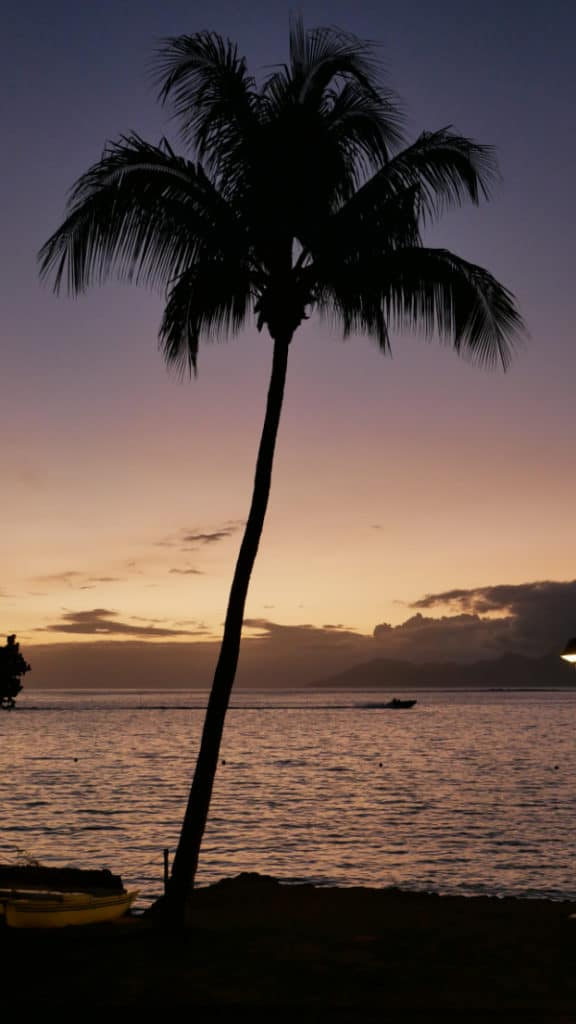Single Palm on Beach at sunset in Moorea